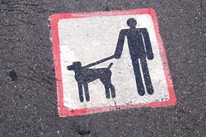 In einigen Bundesländern ist eine Haftpflichtversicherung für den Hund vorgeschrieben.